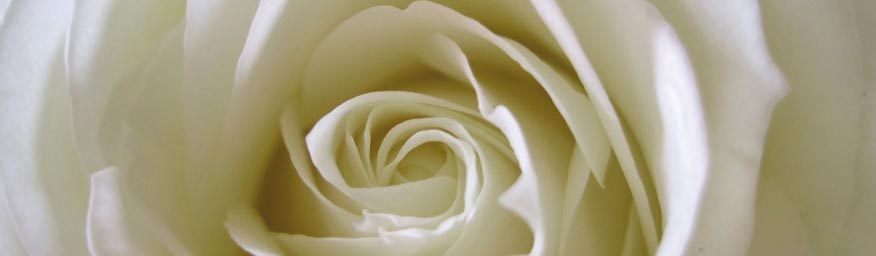 Rose_Slider1